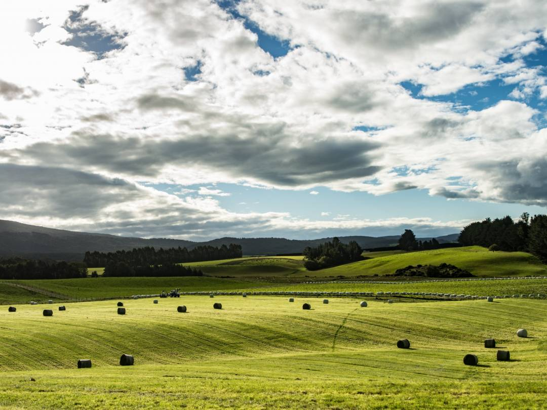 Supporting Farmer-Driven Community Catchment Groups in Southland